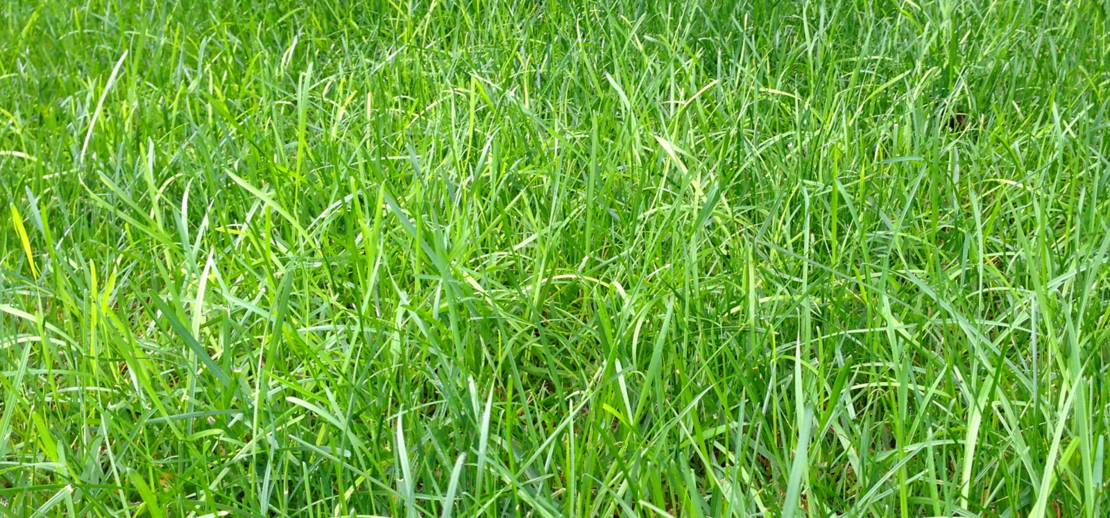 Crownsville Lawn care Grass Yard