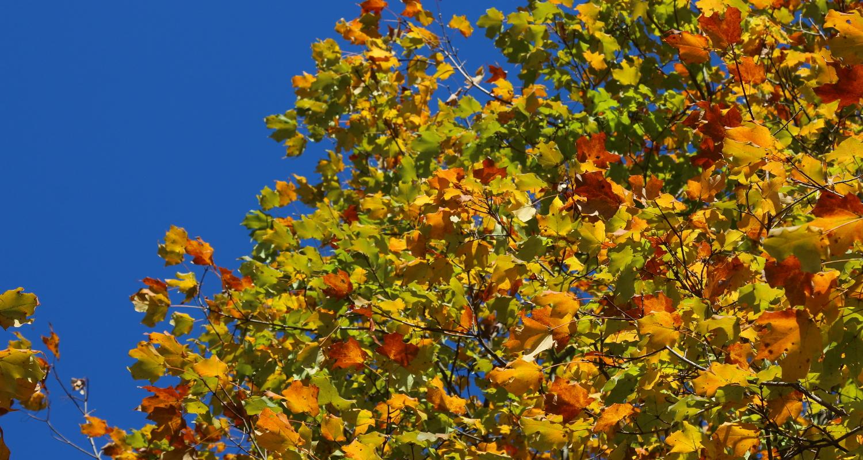 Landscapers Severna Park Tree service