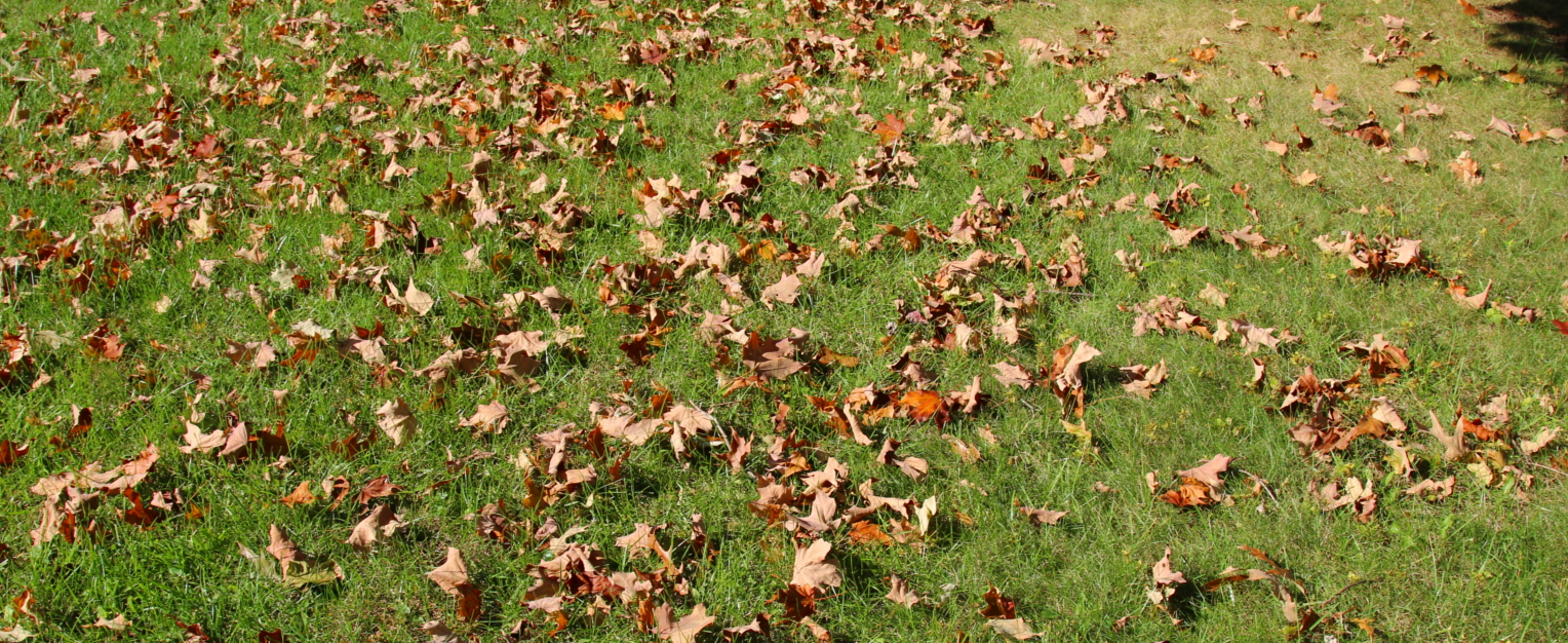 landscaping Severna Park lawn care