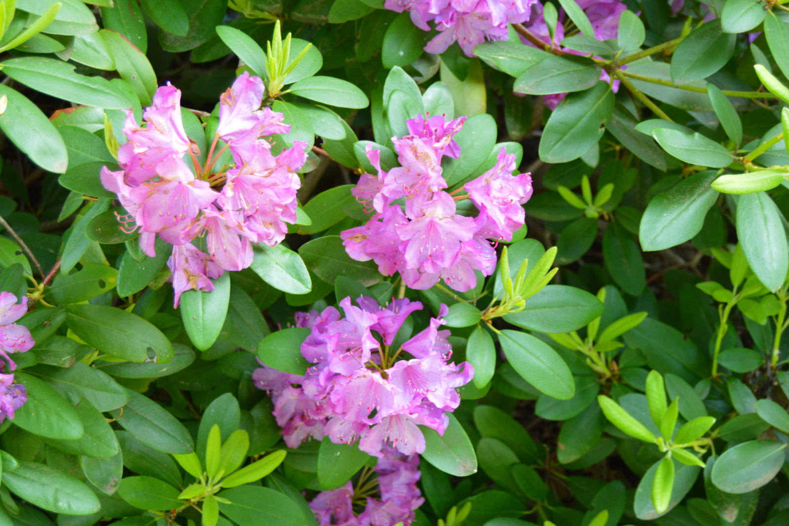 Millersville Landscaping trees bushes shrubs