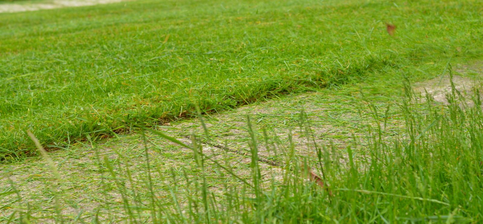 Lawn Care Grass Cutting in Millersville