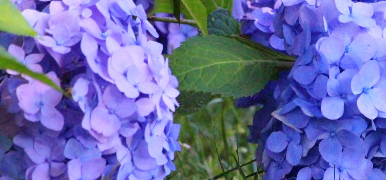Landscapers Near Crofton MD