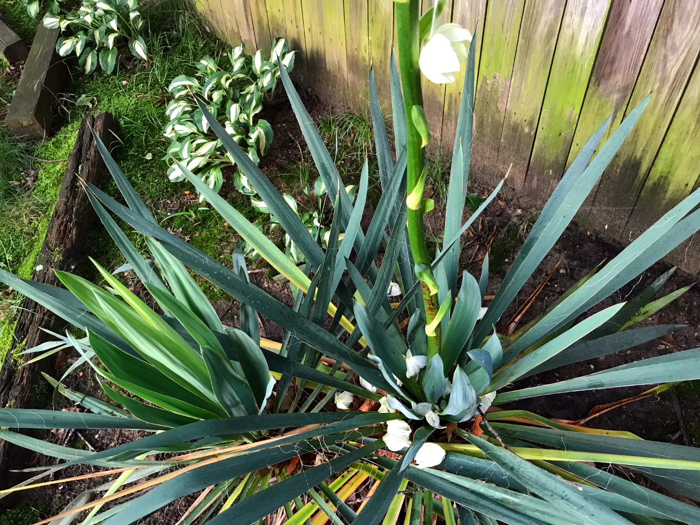 Yucca Pland Landscaping Gambrills MD