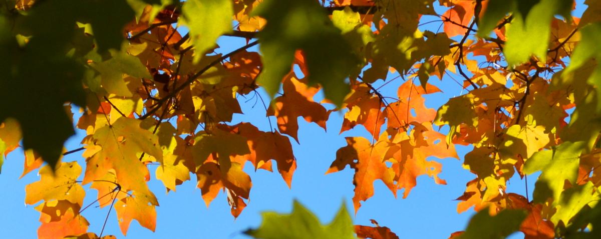 Crofton Fall Landscaping