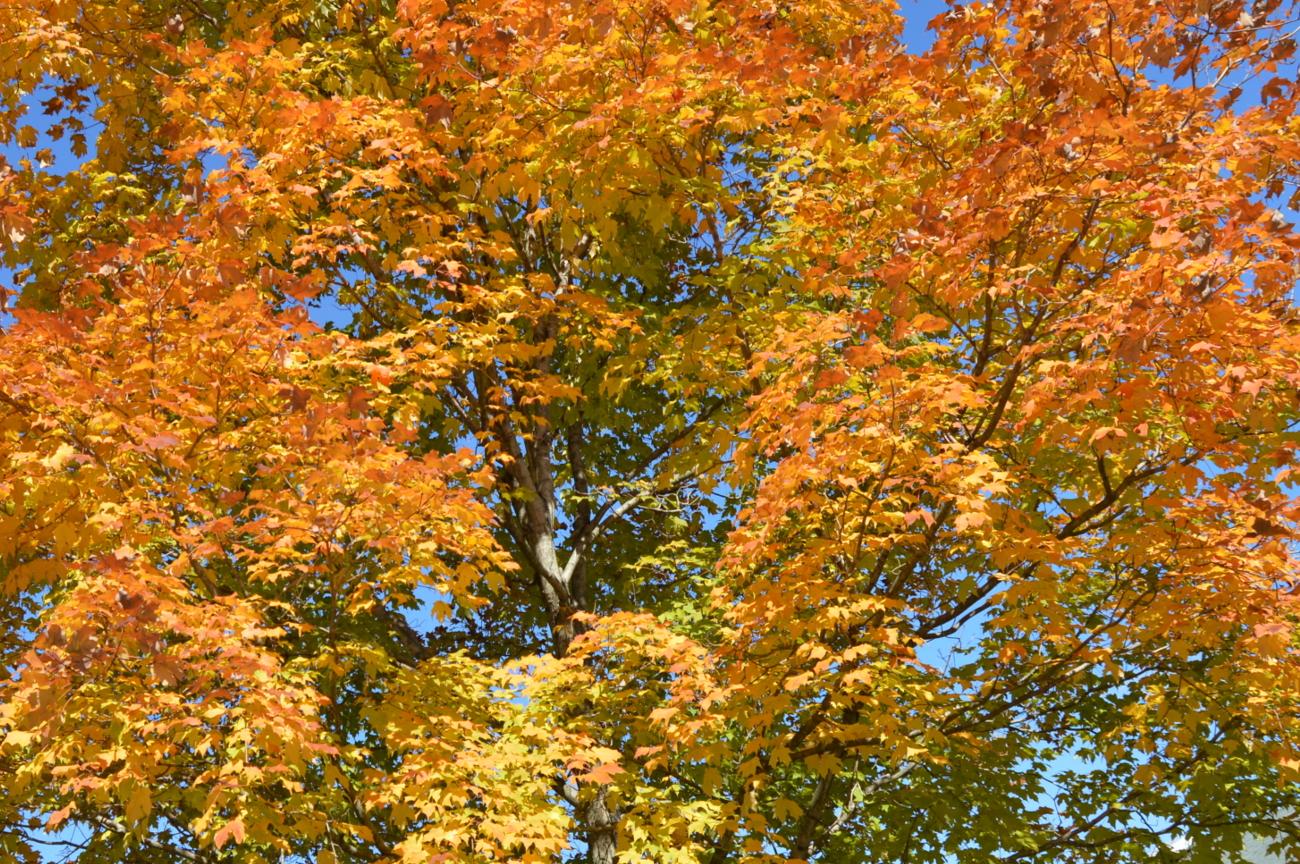Millersville landscapers Leaf removal