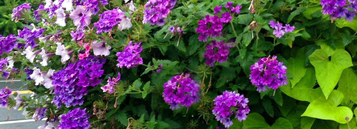 Gardener Crofton Maryland