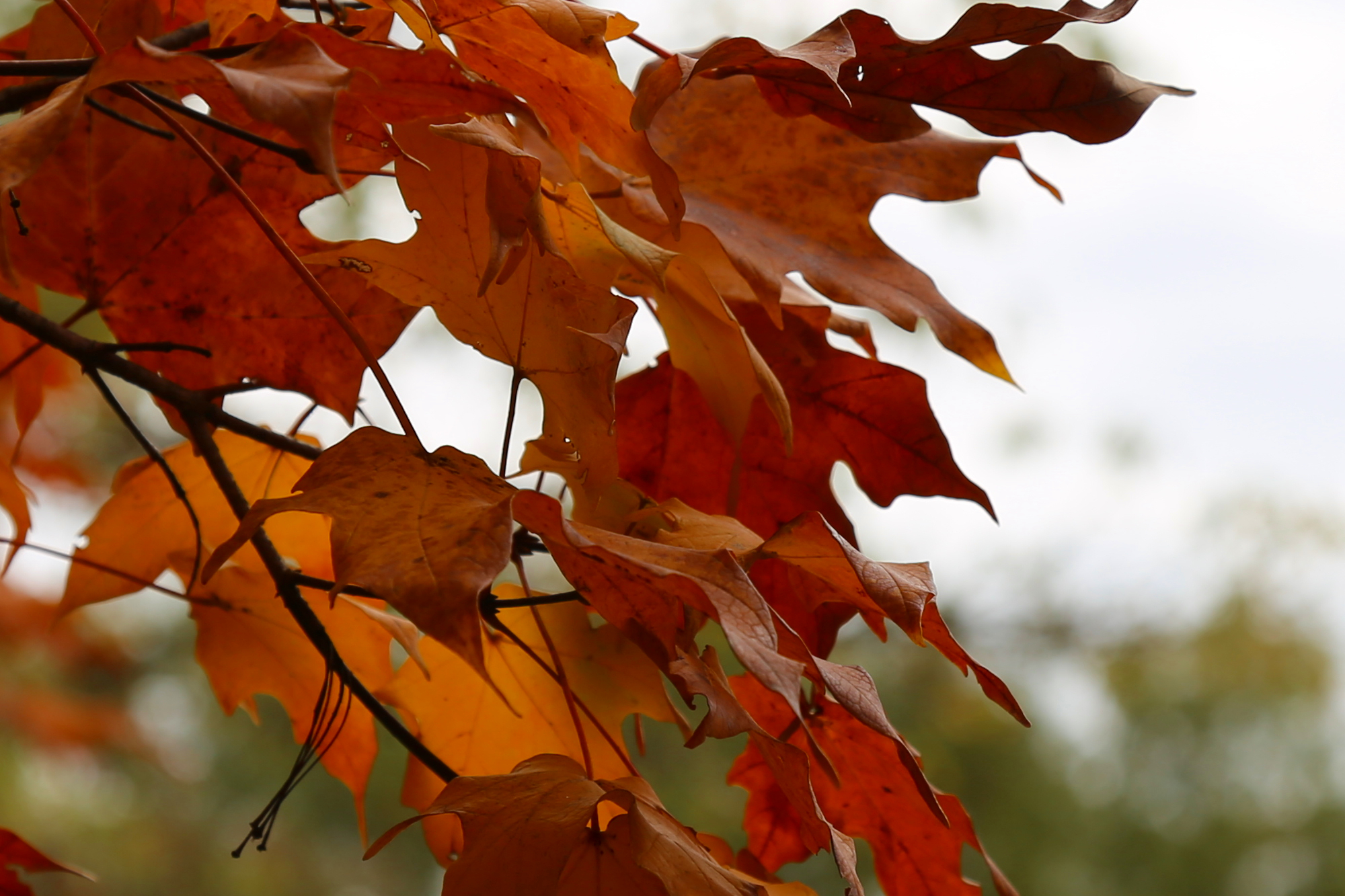 Annapolis landscapers Winterize Irrigation systems and Leaf Raking