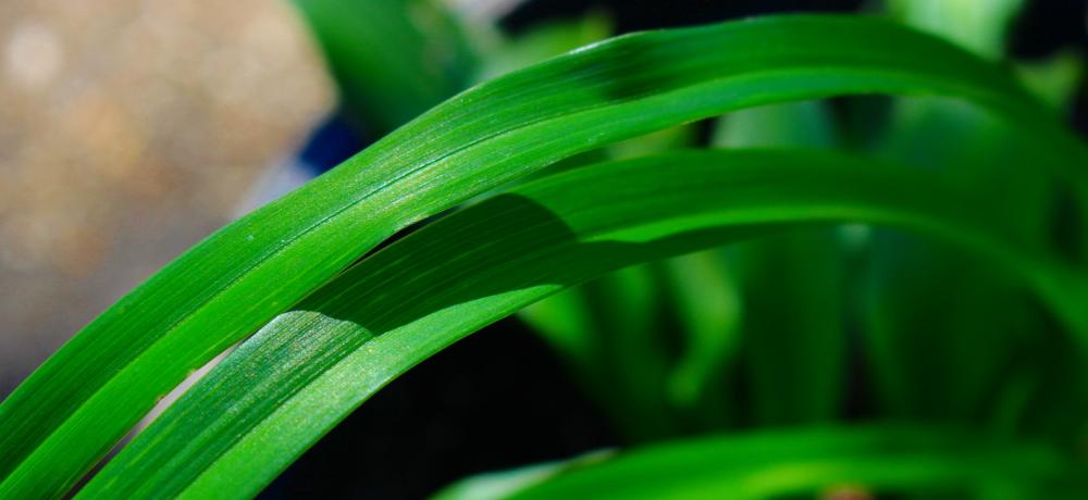 Landscaping Parole 21401