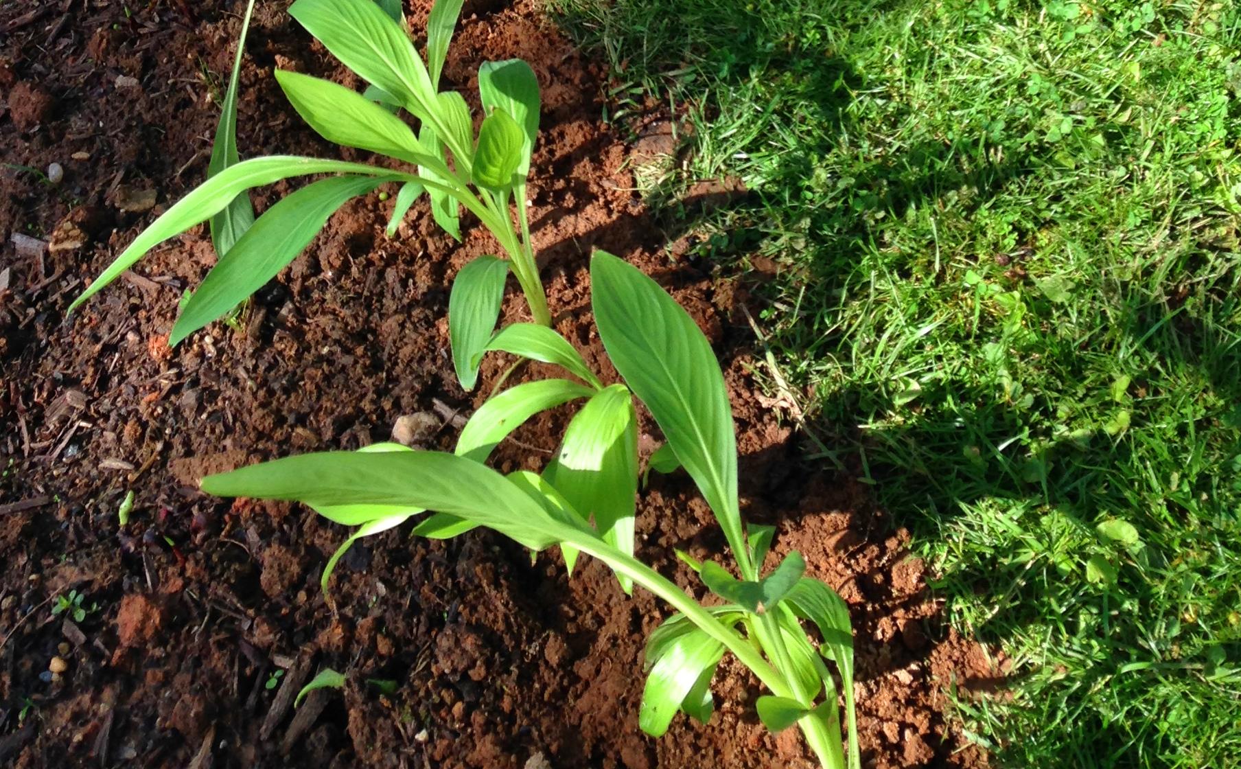 Landscaping Millersville MD 21108